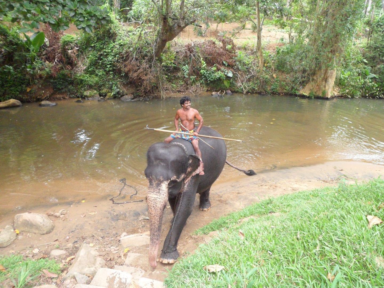 Mahout-med-elefant