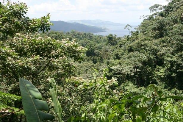 costa-rica-rain-forest-1392613109qwA