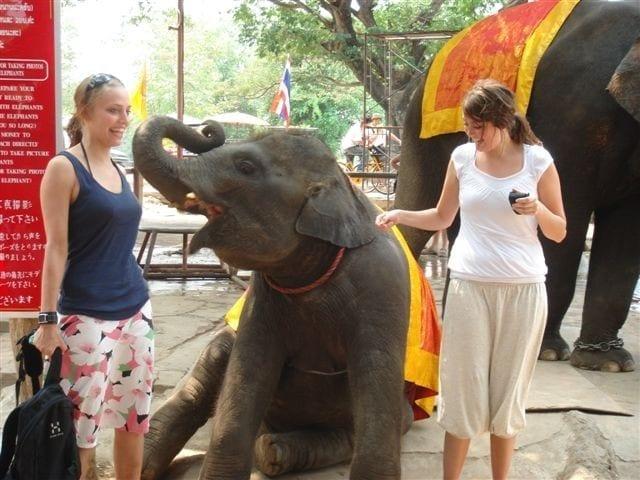 elefant.jpg-Thailand