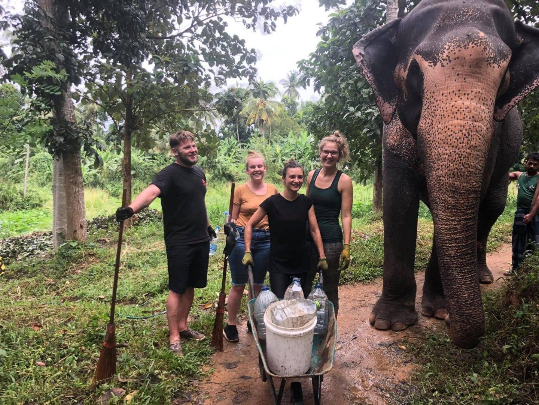 frivilligt-arbejde-elefanter-sri-lanka_2