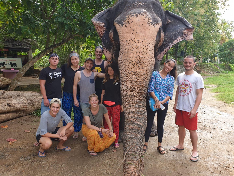 frivilligt-arbejde-elefanter-sri-lanka_3