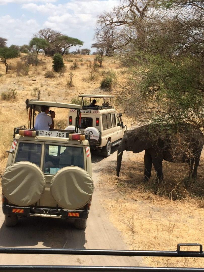 safari-Tanzania-EXIS (2)
